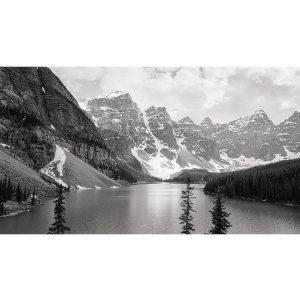 zwart wit natuur foto