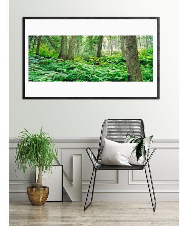 koop natuur foto